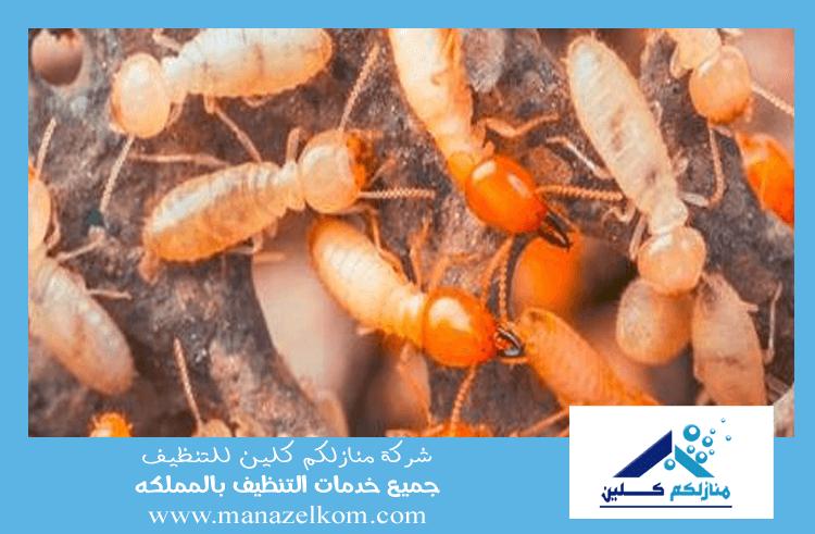 شركة مكافحة النمل الاحمر بالرياض