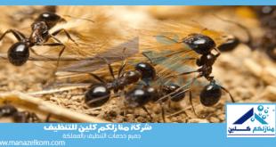 شركة مكافحة النمل الأسود بالرياض
