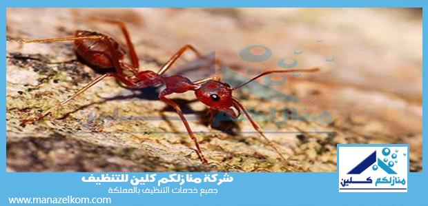 شركة مكافحة النمل الاحمر بالطائف