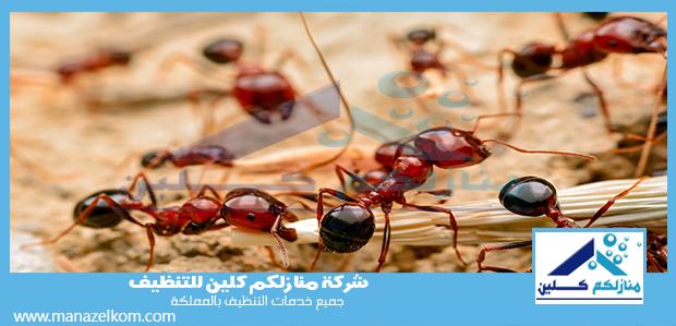 شركة مكافحة النمل الاحمر بجدة