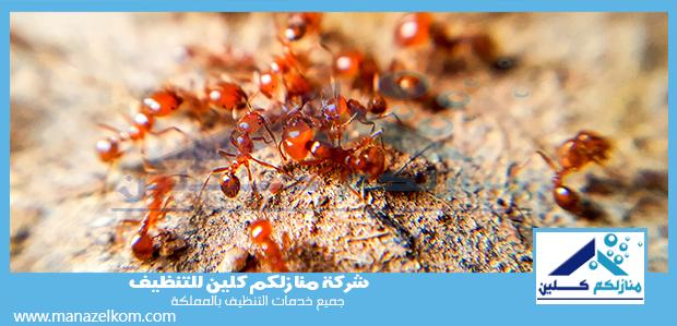 شركة مكافحة النمل الاحمر بالدمام