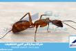 شركة مكافحة النمل الاحمر بالقصيم