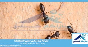 شركة مكافحة النمل الاسود بجدة